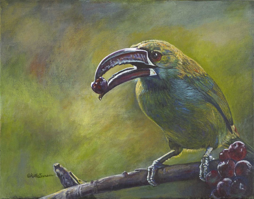 Toucanet, by Katie Iverson